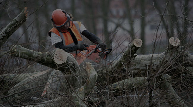 Newtown Tree Service
