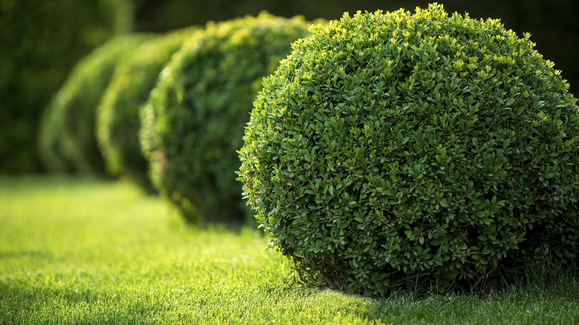 CLM Landscaping LLC Landscaping Company, Landscaper and Landscaping Services slide 1